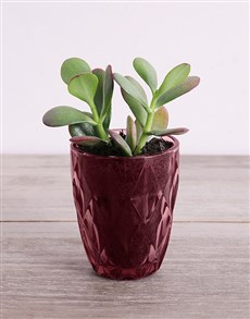 plants: Desert Arrangement in Plum Votive!