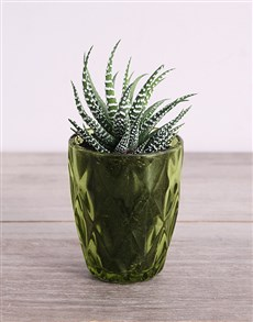 plants: Desert Arrangement in Green Votive!