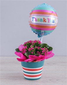 plants: Cerise Kalanchoe Plant and Thank You Balloon Gift!