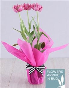 plants: Purple Tulip Plant in Cerise Tissue Paper!