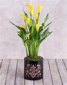 flowers: Yellow Zantedeschia in Stay Wild Vase!