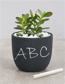 plants: Succulent Chalk Pot!
