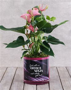 flowers: Pink Anthurium in Office Ninja Vase!