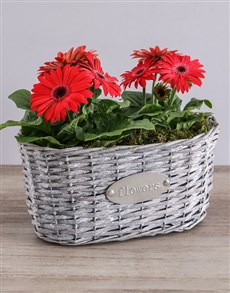 flowers: Mini Gerbera Plant Basket!