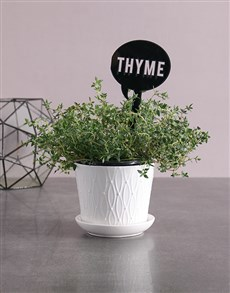 plants: Herb Plant in White Pot!