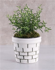 plants: Rosemary Plant in Brick Pot!