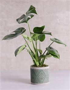 flowers: Monstera Plant in Green Patterned Vase!