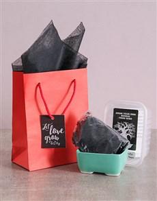plants: Let Love Grow Bonsai Kit!