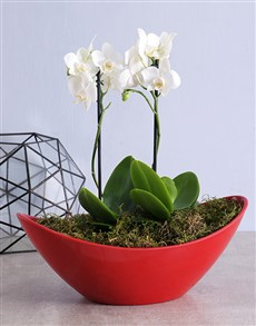 plants: Orchid in Red Boat Pot!