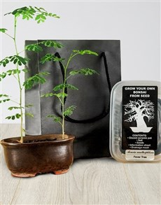 gifts: Grow Your Own Bonsai!