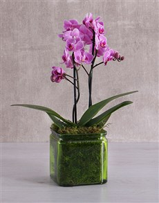 plants: Mini Orchids in a Square Green Vase!