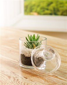plants: Miniature Cactus in a Glass Jar!