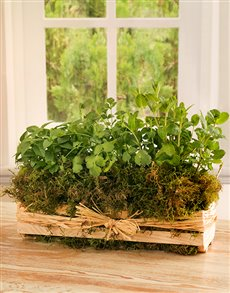 plants: East, West, Home's best Herb Tray!