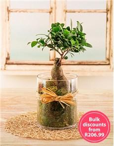 plants: Bonsai Tree in a Cylinder Vase in Bulk!