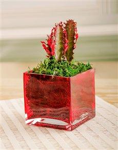 plants: Cute Cactus Gift!