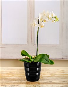 flowers: Amor Vittone White Elegance!