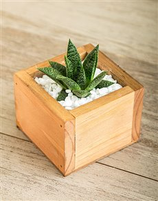gifts: She Said Succulent Gift!