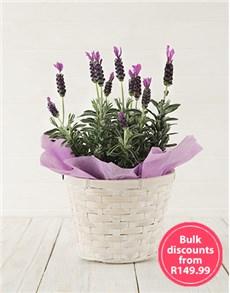 flowers: Sweet Devotion in Bulk!