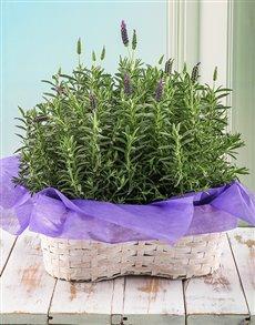 flowers: Lavender Love Arrangement!