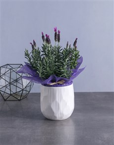 flowers: Soothing Lavender Plant!