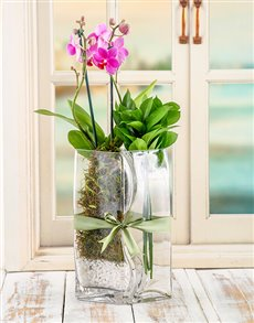 plants: Lovers Orchid Vase!