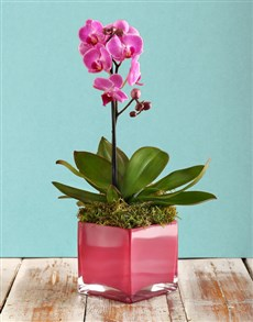 gifts: Pink Orchid!