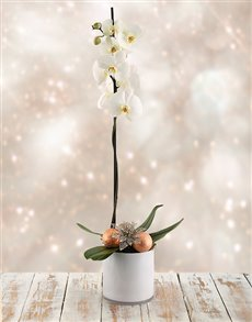 plants: Snow Orchid!