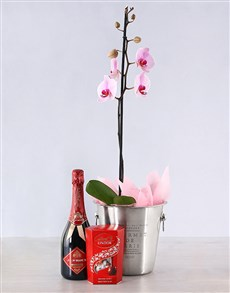 plants: Elegant Orchid Hamper Gift!