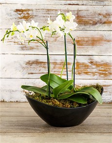plants: Orchid in Chic Black Boat!