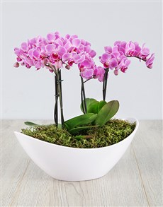 plants: Orchid in Pearly White Boat!