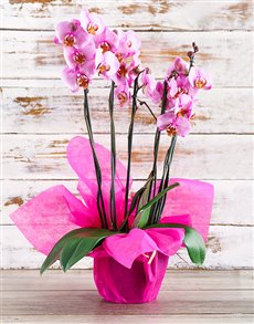 plants: Passionately Pink Orchid!
