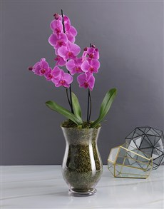 flowers: Orchid Glass Vase!