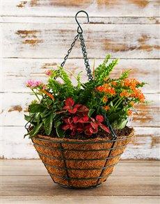 flowers: Basket Full of Green!