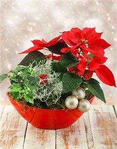 plants: Christmas Poinsettia Boat!