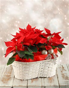 flowers: Triple Poinsettia Basket!