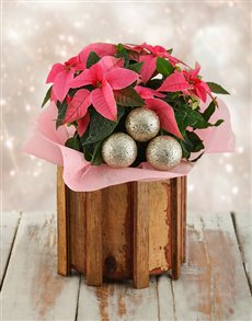 plants: Pink Poinsettia in Wooden Spike Vase!