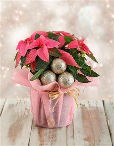 plants: Festive Poinsettia in Pink Paper!