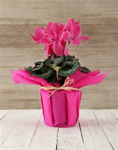 flowers: Cyclamen in Tissue Paper!