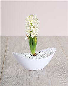 plants: White Hyacinth in a Small White Boat!
