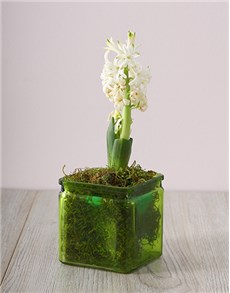 flowers: White Hyacinths in a Square Green Vase!