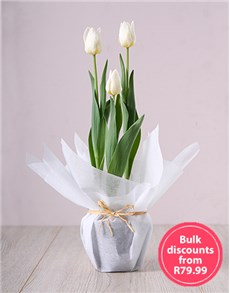flowers: White Tulip Plant in Bulk!