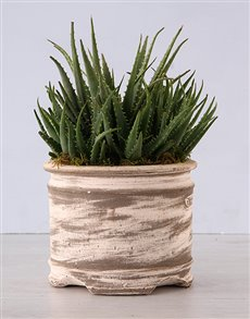 plants: Aloe Plant in Ceramic Pot!