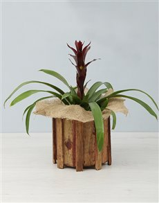 flowers: Guzmania in a Wooden Spike Vase!