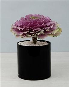 plants: Kale Plant in Black Cylinder Vase!