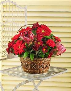 gifts: Basket of Red Seasonal Flowers!