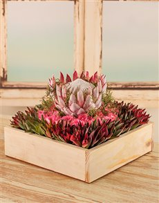 flowers: Proudly Protea Arrangement in Wooden Tray!