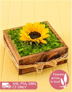 flowers: Sunflower and Sprays in a Wooden Box!