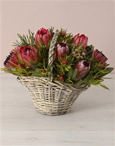 flowers: Stately Mixed Proteas in a Large Basket!