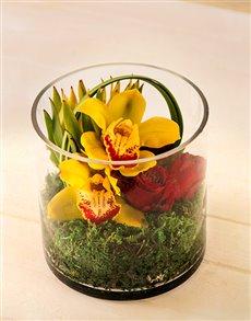 flowers: Piece of Eden Orchid Cylinder Vase!