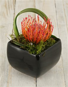 gifts: Pincushion & Rose Medley in Black Vase!